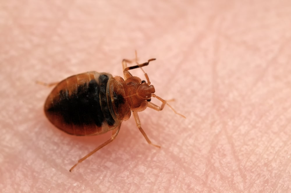 renters-insurance-bed-bugs